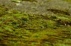 Мох на камне Стоковые Фотографии RF