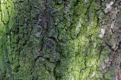 Мох на коре старого дерева стоковое изображение rf