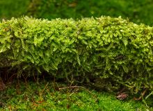мох на поле леса Стоковое Изображение
