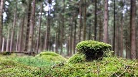 Мох на поле Forrest Стоковые Фотографии RF