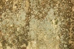 Мох на предпосылке стены Стоковое фото RF