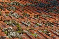 Мох на старой крыше Стоковые Фото