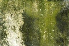 Мох на старом бетоне Стоковая Фотография