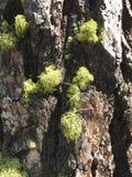 Мох на стволе дерева Стоковая Фотография