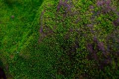Мох на стене Стоковая Фотография RF