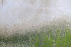 Мох на стене Стоковое фото RF
