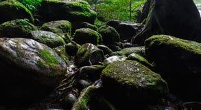 Мох на утесе в лесе Стоковые Изображения RF