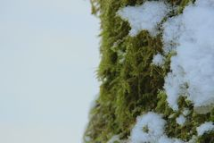 Мох на хоботе дерева стоковые изображения rf
