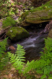 мох папоротников Стоковое Изображение RF