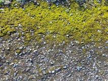 Мох покрыл текстуру гравия земную Стоковые Фото