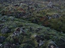 Мох покрыл утесы лавы около Grindavik в Исландии стоковые фото