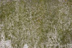 Мох покрыл бетонную стену Стоковые Изображения