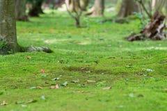 Мох покрыл землю Стоковая Фотография RF