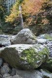 Мох покрыл камень горы Стоковое Фото