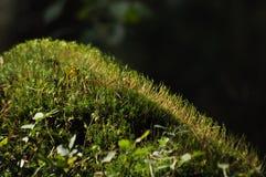 Мох покрыл саженцы ветви дерева и молодые заводы Лучи достижения света Стоковое фото RF