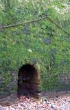 Мох покрыл стену речного берега Стоковая Фотография