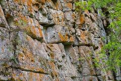 Мох покрыл стену утеса Стоковая Фотография RF