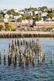 Мох покрыл столбы побережьем Портленда стоковое изображение