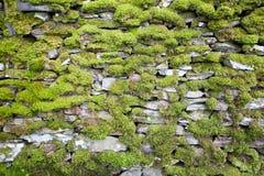 Мох покрыл сухую каменную стену в районе озера Стоковая Фотография