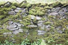 Мох покрыл сухую каменную стену в районе озера Стоковое фото RF