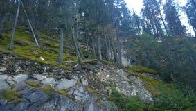 Мох покрыл утесы на горном склоне Стоковая Фотография
