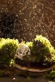 мох предпосылки зеленый стоковое изображение