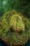 мох предпосылки зеленый Стоковое фото RF