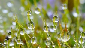 мох пущи Стоковые Изображения RF