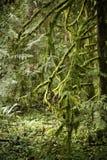 мох пущи Стоковая Фотография