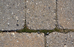 Мох растя через камни, крупный план Стоковое Изображение RF