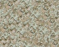 мох расшивы предпосылки безшовный Стоковые Изображения RF