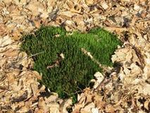 Мох сердца Стоковая Фотография RF