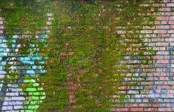 Мох стены Стоковые Изображения RF