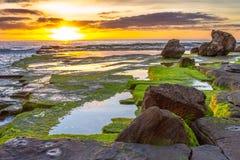 Мох утра Стоковая Фотография RF