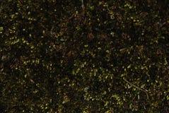мох Стоковое Изображение RF