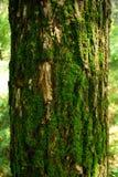 мох Стоковое фото RF