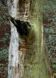 мох Стоковая Фотография RF