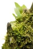 мох Стоковое Фото
