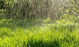 Мочащ лето позеленейте лужайку в саде Стоковая Фотография RF