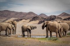 Моча барьер слона пустыни стоковое фото rf