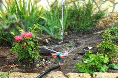 Моча заводы в саде с turntable полив fl стоковые изображения
