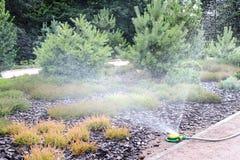Моча сад Стоковые Фото