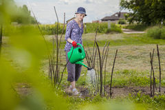 Моча сад Стоковое Фото