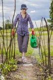Моча сад Стоковое Изображение RF