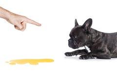 Моча собаки Стоковая Фотография