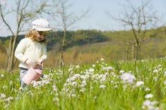 Моча цветки Стоковые Фотографии RF