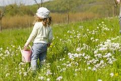 Моча цветки Стоковые Изображения