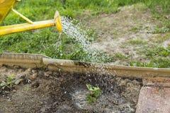 Мочить заводы в саде Стоковое Фото