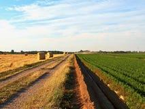 Мочить поле овоща с большим шлангом воды летом стоковая фотография