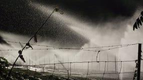 Мочить поле Стоковые Фото